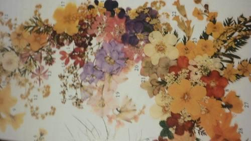 Flores prensadas