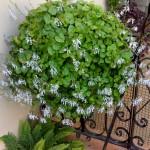 plantas que atraen el dinero