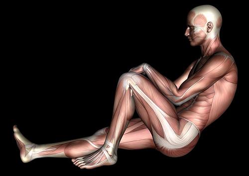 Algunas curiosidades sobre el cuerpo humano