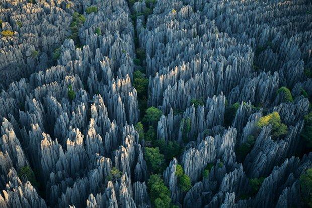 El bosque de piedra
