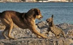perros y gatos 1