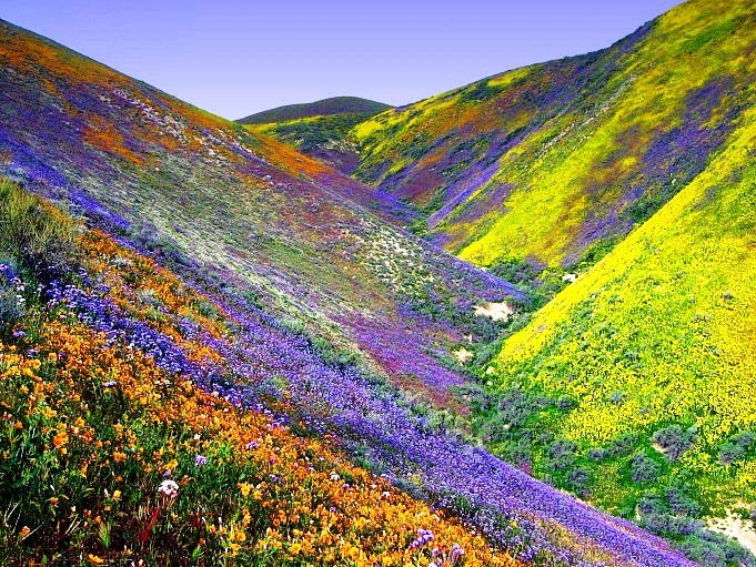 Valley Flowers