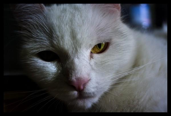 Comida para gatos esterilizados - Alimento para gatos esterilizados ...