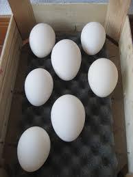 Huevos moriscos