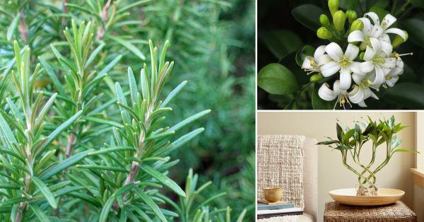 Plantas positivas para tu hogar
