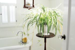 Plantas para un baño